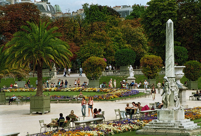 Potted palm trees in the luxembourg gardens for Chaise jardin du luxembourg